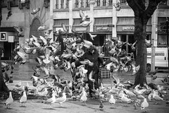 Inge Hoogendoorn (ingehoogendoorn) Tags: blackandwhite bird birds zwartwit pigeon pigeons thenetherlands streetphotography vogels denhaag feedingthebirds blacknwhite thehague meeuw meeuwen vogel duiven hectic duif zeemeeuw zeemeeuwen straatfotografie vogelsvoeren