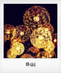 """#DailyPolaroid of 11-11-15 #44 • <a style=""""font-size:0.8em;"""" href=""""http://www.flickr.com/photos/47939785@N05/23423242609/"""" target=""""_blank"""">View on Flickr</a>"""