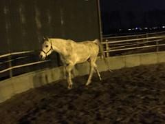 Saampjes niet gepoets (gill4kleuren - 11 ml views) Tags: horse white me beauty fun outside happy riding together gill anisa paard pret hengst arabier