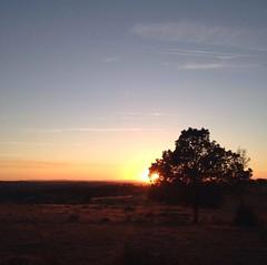 Sunset (Amorestfutui) Tags: sunset sky tree portugal photography cu prdosol fotografia rvore almeida entardecer iphone aoarlivre squarephotography instagramphoto