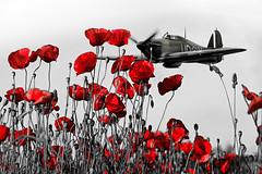 POP0003 (Smart Aviation Art) Tags: poppy poppies poppyfield poppyfields lancaster vulcan avro spitfire hurricane aircraft military bbmf