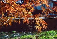 高尾山_3 (Taiwan's Riccardo) Tags: 2016 japan tokyo 135film fujifilmrdpiii transparency color plustek8200i rangefinder 日本 東京 zeissikoncontessa35 tessar fixed 45mmf28 高尾山 八王子 2016tokyovacation