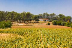 _MG_7589 (Lost-Travelers) Tags: emporda baix girona catalunya paisatge paisaje