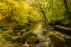 River (Keith in Exeter) Tags: river stream creek water rock autumn fall moss tree woodland leaves foliage landscape nationalpark dartmoor devon england