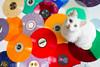 2016 MUSIC 🎵 (333Bracket) Tags: sonyrx1r zeiss35mmf2 london 333bracket fullframe digital music blogging cat vinyl records 2016 post lola eyes animal