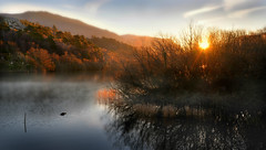 The stick and the otter (PentlandPirate of the North) Tags: llynpadarn lake snowdonia sunrise