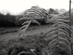 Cold is coming (borneirana) Tags: winter colores color cold black blackandwhite bw invierno plantas plants herbst helechos