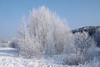 Winter in Lithuania (13) (rimasjank) Tags: frost winter snow cold lithuania lietuva