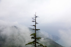 From here to ethernity (Cna1_10) Tags: maple bc canada fog mountain کوه مه غریبه stranger ocean tree autumn