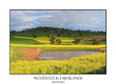 Scenic farmlands landscape (sugarbellaleah) Tags: agriculture landscape canola farming hills scenic pretty spring season harvest farmland dam flowers yellow green sky clouds nature food growing industry pattern water plants cereal canolaoil rural centralwestnsw woodstock australia