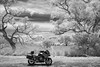 barjarg-2306-ps-w (pw-pix) Tags: motorbike motorcycle roadverge view landscape summer trees oldtrees hills mountains grass grasses clouds sky farm farms bmw r1200rt touringmotorcycle hot sunny still midday ir infrared bw blackandwhite victorianhighcountry nearmansfield midlandhighway barjarg victoria australia