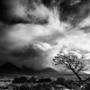Light, Tree, Cloud, Cuillin (amcgdesigns) Tags: glenbrittle scotland unitedkingdom gb andrewmcgavin skye tree clouds drama mono monochrome blackandwhite landscape cuillin light stormy stormyweather weather scottishweather nikcollection silverefex eos7dmk2 canon1022mm squarecrop square