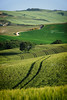 Curvy lines in Tuscany (iPics Photography) Tags: tuscany lines curvy curved landscape stradebianche nature field curvylines whiteroad unpaved road stradabianca vald'orcia orcia pienza wheat wheatfield lonetree toscana hills dirtroad italy green