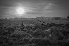 so cold morning!!! (Sivispacem...) Tags: sd1 merrill sigma 1835 art hsm black white winter morning cold landscape noir blanc frozen ice gel fontenay st père