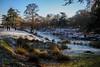 bradgate park - trees (grahamdale74) Tags: xmas 2016 alyssia caitlin chel roy joan wetlands