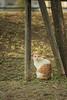 猫、凛々しい (Yuichi Yoshimoto) Tags: nikon d750 sigma sigmaapomacro150mmf28exdgoshsm cat animal