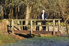 021 2017 shivery, sunny solo walk to Bibury (Margaret Stranks) Tags: 021365 365days 2017 quenington coln bibury gloucestershire uk bridge frost wall stile cold