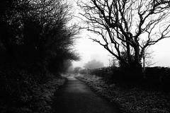 Imagination Followed (JamieHaugh) Tags: clevedon northsomerset somerset england sony a6000 blackandwhite blackwhite bw monochrome outdoors path trees uk nature britain