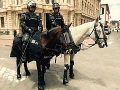 Mounted Police Cuenca Ecuador (Lonfunguy) Tags: horses horse ecuador police protection policia cuenca mountedpolice azuay