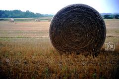 DSC_0266 (CTINphotography) Tags: toronto canada nature field grass weeds hay bales christin haybales grassball nikond700 ctinphotography
