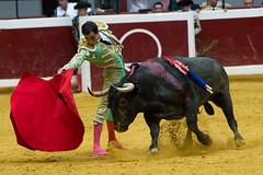 DSC_9316.jpg (josi unanue) Tags: animal blood spain bull arena bullfighter sansebastian esp toro traje asta sangre espada bullring unanue guipuzcoa matador torero tauromaquia sufrimiento cuerno urea banderilla banderilero