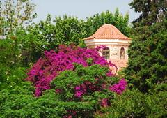 Park in Antalya (petrk747) Tags: park trees flower travelling nature turkey garden antalya bushes shrubs treesandshrubs