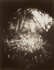 (NooFZz) Tags: bw paris grass circle landscape largeformat 9x12 boyer saphir 7519 photographicpaper paperpositive bulldog4x5