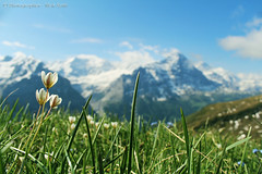 Beautiful switzerland (Meir Roth) Tags: morning flowers light summer wallpaper cloud mountain alps flower macro green nature beautiful grass leaves weather canon roth landscape photography switzerland spring pretty colours view blossom first images panoramic backgrounds hd grindelwald beautifulcolors overlooking mothernature meir jungfrau 4k mroth bachalpsee coolperspective sunslight beautifulflower miracleofnature romanticflowers canon600d beautifulswitzerland dayofhappiness meirroth mroth874