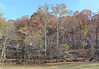 Wall of trees November 5, 2015 s (clw_and_dog) Tags: panorama art landscape photography photo fineart images panoramic photographic photographs fineartphotography panoramics panograph panogram panoramiclandscape panoscape newmexicophotography marylandphotography panogaph panoramiclandscapephotos