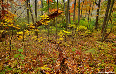 Colorful Autumn Forest (mswan777) Tags: autumn trees tree fall nature colors leaves rain fog forest landscape outdoors saturated nikon hiking michigan sigma trail wilderness 1020mm d5100