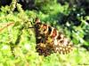 Butterfly 1114 (+450000 views!) Tags: butterfly borboleta farfalla mariposa papillon schmetterling فراشة