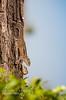Claverton Estate (SampathG) Tags: bangalow clavertonestate norton scenary srilanka tea teaestate claverton fauna flora
