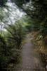 山中遊039 (kingston Tam) Tags: moss grass path hillside hiking field bigtree oddtree garden nature fujifilmxt1