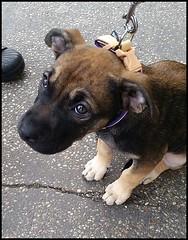 Emy-(Three months) (collage42 Pia-Vittoria//) Tags: animal animale dog littledog cane cucciolo