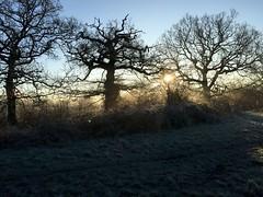 Frosty Sunrise (Heaven`s Gate (John)) Tags: frost sunrise dawn trees silhouette england winter mist landscape atmosphere dickens heath dickensheath johndalkin heavensgatejohn field grass morning blue sky
