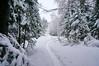 DSC02287_2 (aleksey1971) Tags: siberia altai belokurikha winter nature forest landscape tree snow сибирь алтай белокуриха зима природа пейзаж лес снег