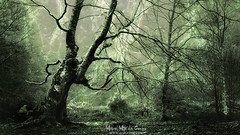 El árbol fantasma (Mimadeo) Tags: scary forest fear horror mood monochrome landscape magic tree nightmare light nature mystery spooky darkness halloween woods evil creepy fantasy gothic mysterious surreal branch enchanted ghost atmosphere green trunk sunlight twisted