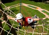 Ropes courses with #gaming and #socialmedia integration is the answer to customer demand http://j.mp/2ihhlG4 (Skywalker Adventure Builders) Tags: high ropes course zipline zipwire construction design klimpark klimbos hochseilgarten waldseilpark skywalker
