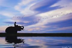 """Be grateful (gusdiaz) Tags: photoshop photomanipulation digital art digitalart elephan reflection clouds sky beautiful serene sereno hermoso elefante reflejo agua nubes cielo rio river kid joven"