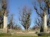 Este invierno pontevedrés (juantiagues) Tags: pontevedra alameda árboles cielo azul juantiagues juanmejuto