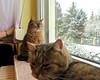 aufgepaßt... (ekeha) Tags: 170114 katzen winter schnee zimmer