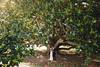Olly & Grace (Jack Chauvel | http://www.jackchauvel.com) Tags: 140117 14thofjanuary2017 170114 australia australianwedding australianweddingphotographer imaginativeweddingphotography jackchauvel jackchauvelphotography manlywedding og olivergrace ollygracewedding shellybeachwedding stthomaswedding summer summerwedding sydney sydneywedding sydneyweddingphotographer theboathousewedding httpwwwjackchauvelcom