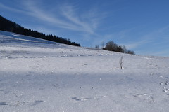 PHO_0159 (Dimi_M) Tags: neige soleil nature foret