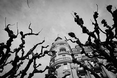 Tentacles (oliko2) Tags: tentacles tree branches blackwhite bw monochrome sigma1750 f28 nikond7100 lucerne luzern switzerland schweiz building architecture hotel sky perspective up contrast nationalquai