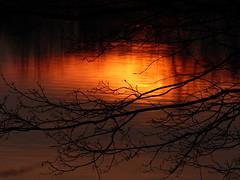 WasserFarben (four-hearts) Tags: sonnenuntergang abendhimmel himmel abendrot abendlicht licht abend zweige äste bäume pflanzen wasser spiegelung natur landschaft wasserfarben