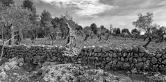 el muro (explored) (Simple_Sight) Tags: muro wall stones landscape outdoors monochrome trees sky clouds structure