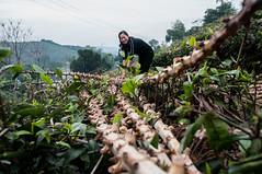 : Vietnam: climate-smart village building resilience
