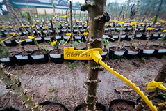 Cassava impact assessment, Vietnam