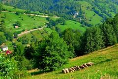 FOTO0957 (Peter Ghita) Tags: summer mountains landscape seasons romania bucegi fujinonxf1855mmf284rlmois fujifilmxt1