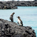 "2015-08-18-13h02m29-Galapagos • <a style=""font-size:0.8em;"" href=""http://www.flickr.com/photos/25421736@N07/20638057570/"" target=""_blank"">View on Flickr</a>"